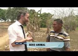 Enlace a El curioso hobby que tienen en este pequeño pueblo de Colombia con las burras