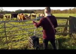 Enlace a Definitivamente a las vacas no les gusta las guitarras