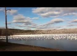 Enlace a Este es el sonido de como 10.000 gaviotas huyen a la vez de este lago