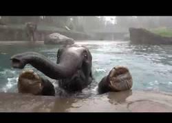 Enlace a Así se ve bajo el agua como nada un elefante
