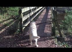 Enlace a Este perro tiene un gran problema al intentar cruzar el puente con su palo
