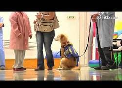 Enlace a Estos perretes tan majos han sido entrenados para ayudar a gente con discapacidad