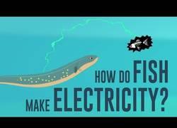 Enlace a Si pensabas que los peces eléctricos eran solo cosa de Pokemon debes mirarte esto