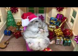 Enlace a Este hámster disfruta de sus vacaciones navideñas