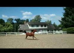 Enlace a La mejor manera para escapar de un lugar la tiene este caballo