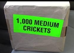 Enlace a Se compra 1000 grillos y los suelta en su jaula llena de reptiles