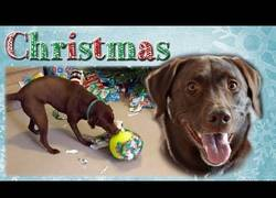 Enlace a La gran emoción de este perro al recibir como regalo una enorme pelota de tenis
