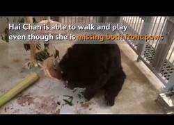 Enlace a La reacción de este oso tras ver la luz del día después de 10 años en una jaula
