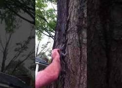 Enlace a Iba a liberar una ardilla en un árbol y lo que sucedió a continuación le traumatizará de por vida