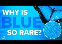 Enlace a ¿Por qué el azul es tan raro en la naturaleza?