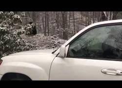 Enlace a Esto es lo que le pasa a tu coche si dejas que un oso se cuele dentro