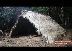 Enlace a Nuestro primitivo favorito se construye una cabaña conforma de A