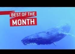 Enlace a Los mejores vídeos de Enero que han dado la vuelta al mundo