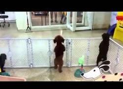Enlace a La alegría de este perrito al reencontrarse con su dueño en la guardería