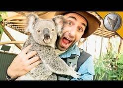 Enlace a Coyote Peterson se encuentra con un koala realmente adorable