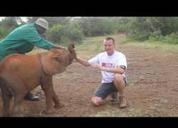 Enlace a El elefante que solo quería jugar