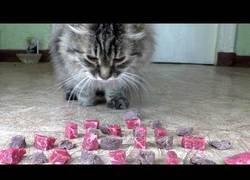Enlace a Ponen a prueba a un gato dándole a elegir carne cruda o cocinada