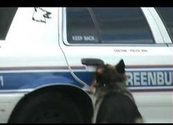 Enlace a Este perro policía es lo más inteligente qu ehe visto en los últimos tiempos