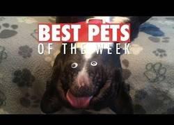 Enlace a Recopilatorio de esas mascotas que nos han alegrado la vida esta semana