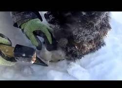 Enlace a Cachorro atrapado en la nieve es rescatado por un ruso
