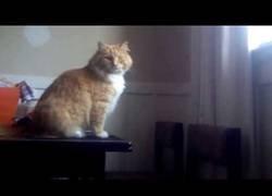 Enlace a El fail más inesperado del gatico al intentar dar un salto desde la mesa