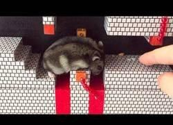 Enlace a Pone a prueba a su hamster en mitad de un nivel de Super Mario Bros