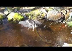 Enlace a El gato que trataba de pescar sobre una pecera totalmente congelada