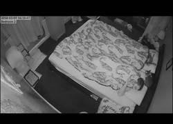 Enlace a La cámara de seguridad de casa pilla a su conejo haciendo de las suyas mientras ellos duermen