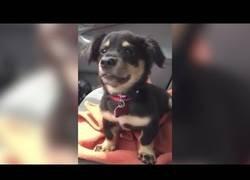 Enlace a El curioso sonido que hace este perro a su dueño en el coche