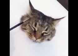 Enlace a El alucinante dibujo hiper realista de un gato
