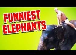 Enlace a Momentos divertidos con elefantes
