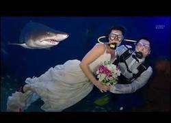 Enlace a Bodas y bodas
