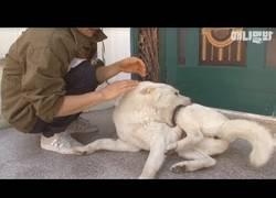 Enlace a Este perro sufrió maltrato y no deja de morderse a si mismo :(