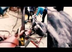 Enlace a Otra vez más, muere un caballo en la Feria de Abril sevillana