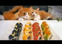 Enlace a Los gaticos más atentos del mundo viendo como se prepara unos deliciosos sushis