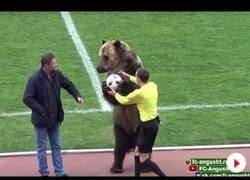 Enlace a Gran polémica por este oso que salió a hacer las gracias al público y dar el balón del partido
