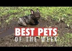 Enlace a Los animales que lo están petando esta semana en internet