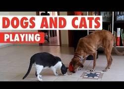 Enlace a ¿Gatos y perros enemigos? Esto demuestra que pueden ser grandes amigos