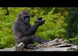 Enlace a 8 animales en peligro de extinción
