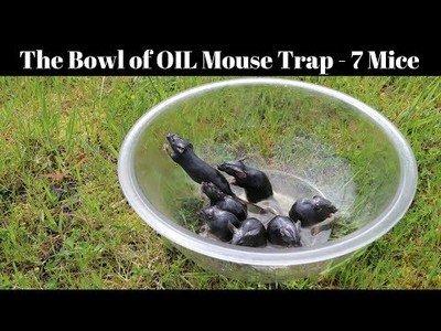 Un bol con aceite es la trampa más diabólica para unas ratas