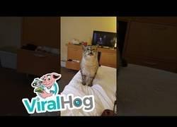 Enlace a El estornudo de este gatico es demasiado adorable