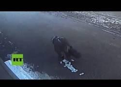 Enlace a Este ladrón se hizo con un gran botín, se le cayó por la calle y se lo dejó allí tirado