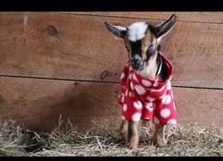 Enlace a La fiesta del pijama llega a la era de las cabritas