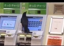 Enlace a Pillan a un cuervo tratando de comprarse un ticket de tren con una tarjeta de crédito