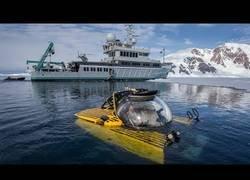 Enlace a Descienden a la parte más honda de la Antártida y observan las especies que allí habitan