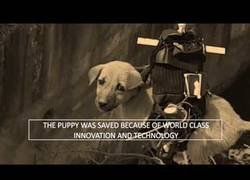 Enlace a El revolucionario sistema usado para rescatar perritos abandonados por la calle en zonas poco accesibles