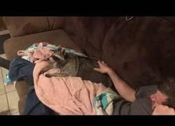 Enlace a Los mapaches también reclaman un poco de cariño