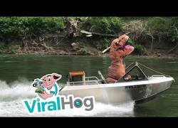 Enlace a Un dinosaurio en el bote