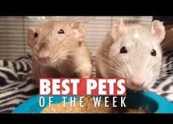 Enlace a Los mejores animalitos que hemos encontrado por la red esta semana