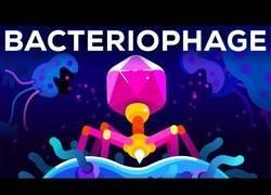 Enlace a Virus para matar bacterias